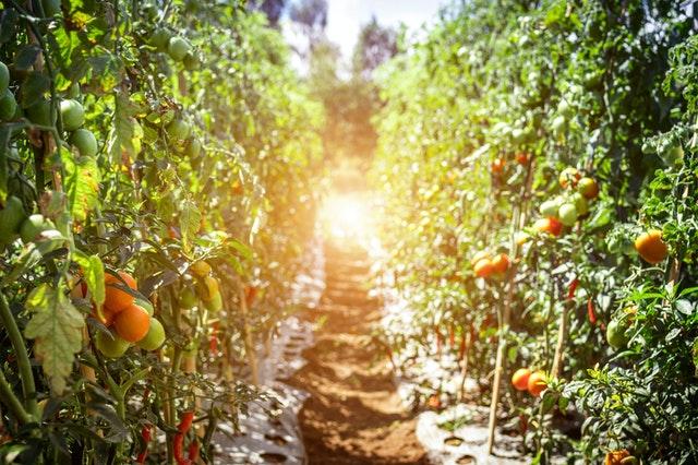 селско-стопанство-мрежи